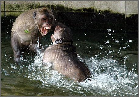apen-3.jpg