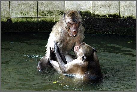 apen-4.jpg