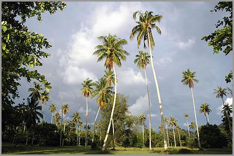 palmbomen.jpg