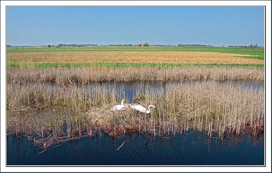 april-7-zwanen-nest
