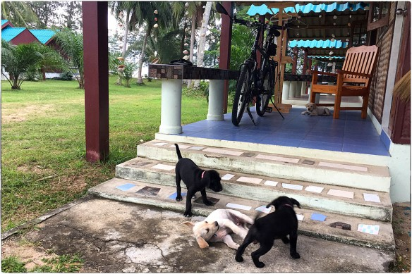 waakzicht-231216-1713-k4-ruen-thalay-guesthouse-ban-krut-thong-chai-thailand-img_9537