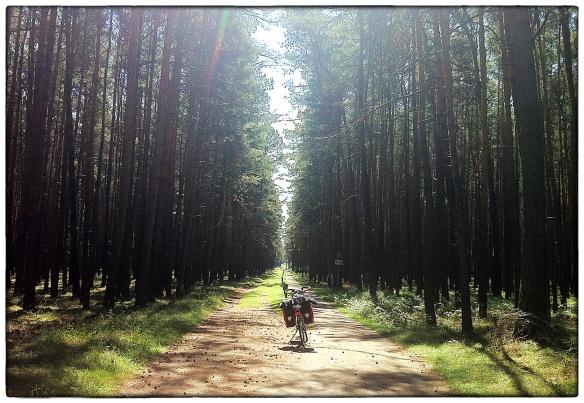 Hier was geen twijfel of het bospad te befietsen was. Er stond zelfs een bordje: fietsers. Mooi, zo'n naaldbos waar de bomen wijd uiteen staan en er licht valt alsof het loofbos is.