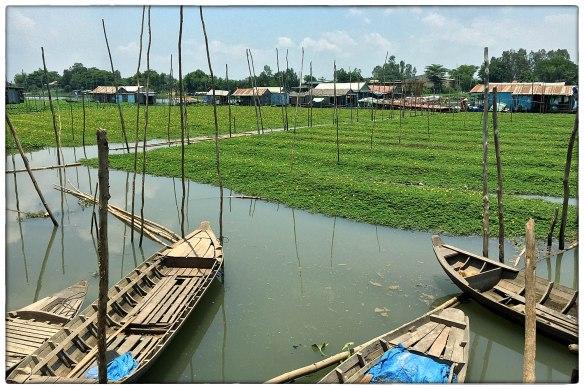 VIETNAM - Kijk nou toch, landbouw op het water. Drijvende akkers 'morning glory', waterspinazie. Hoe mooi, en hoe slim!