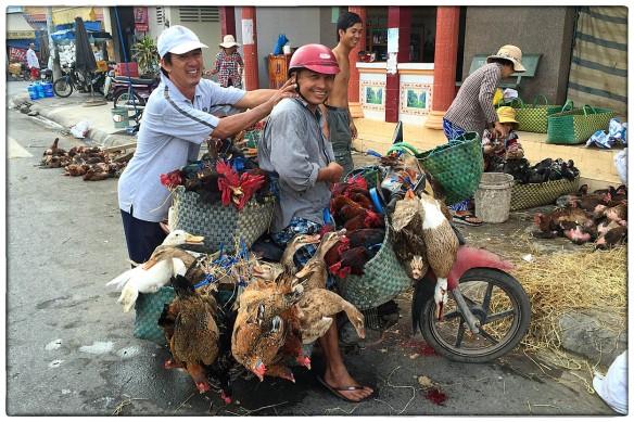 VIETNAM - Waar ter wereld ook, dierenwelzijn is niet iets dat écht leeft onder de mensen. Of het de megastallen in Nederland zijn, of deze harteloze manier om levende have te vervoeren... Ik ben er nog steeds niet ut: is het cultureel bepaald? Heeft het iets met innerlijke beschaving te maken? Het blijft een moeilijk vraagstuk, maar dit soort beelden helpen wel je eigen standpunt te bepalen.