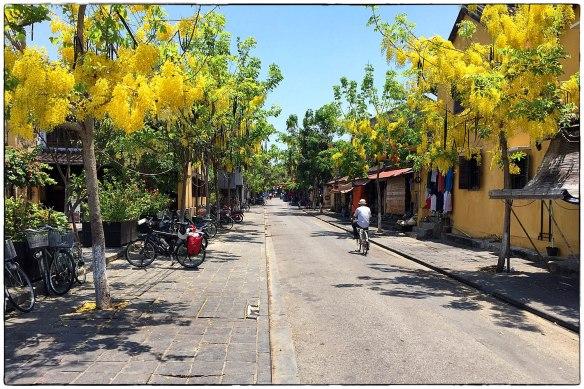 3. Hoi An bloeibomen Cassia fistula Indische goudenregen IMG_8357