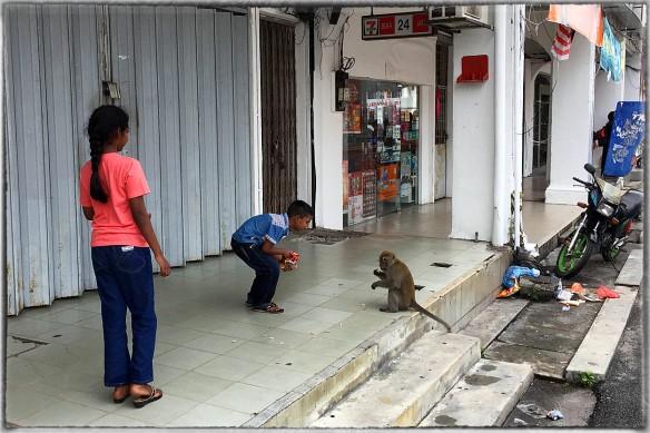 Maleisië. Linke soep, een aap voeren. Je weet nooit of hij niet opeens in je benen springt en vastbijt. In dit geval ging het goed, hij verdween met volle mond langs een regenpijp uit zicht.