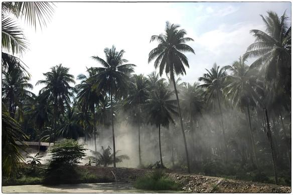 Thailand. Dit is een van de redenen waarom ik van de tropen hou: de kokospalmen. Slank, hoog, sierlijk. Bij dit dorpje wordt vuil verbrand, de rook accentueert de bomen. Prachtig.