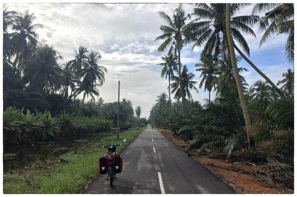 Tot slot. Dit waren de mooiste momenten, het fietsen in de ochtendkoelte langs plantages en kleine dorpen, de weg stil, af en toe een tegenligger die zwaait en een duim opsteekt. De wereld stil en vredig, zoals je 'm graag ziet. Mooi, ja.